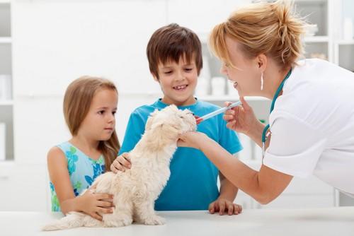 Vaccinations  Mesa, AZ